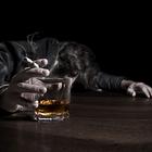 Дарья Халтурина: «Экономика России несет серьезные потери по вине алкоголя и табака»