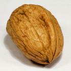 Орехи защищают от рака груди