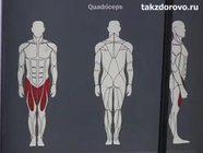 Тренажер для четырехглавой мышцы бедра