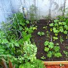 Агрофитнес - красивая фигура, здоровье и собранный урожай