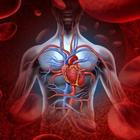 Работа сердца, как основного органа