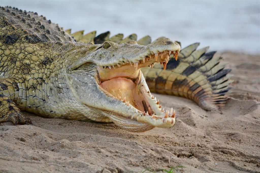 «Крокодил» - опасность химического хищника