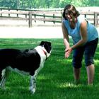 Собака – друг беременных женщин