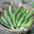 Цуккини и прочие кабачки