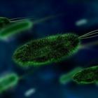 Генетики нашли способ борьбы со стойкими грибковыми инфекциями