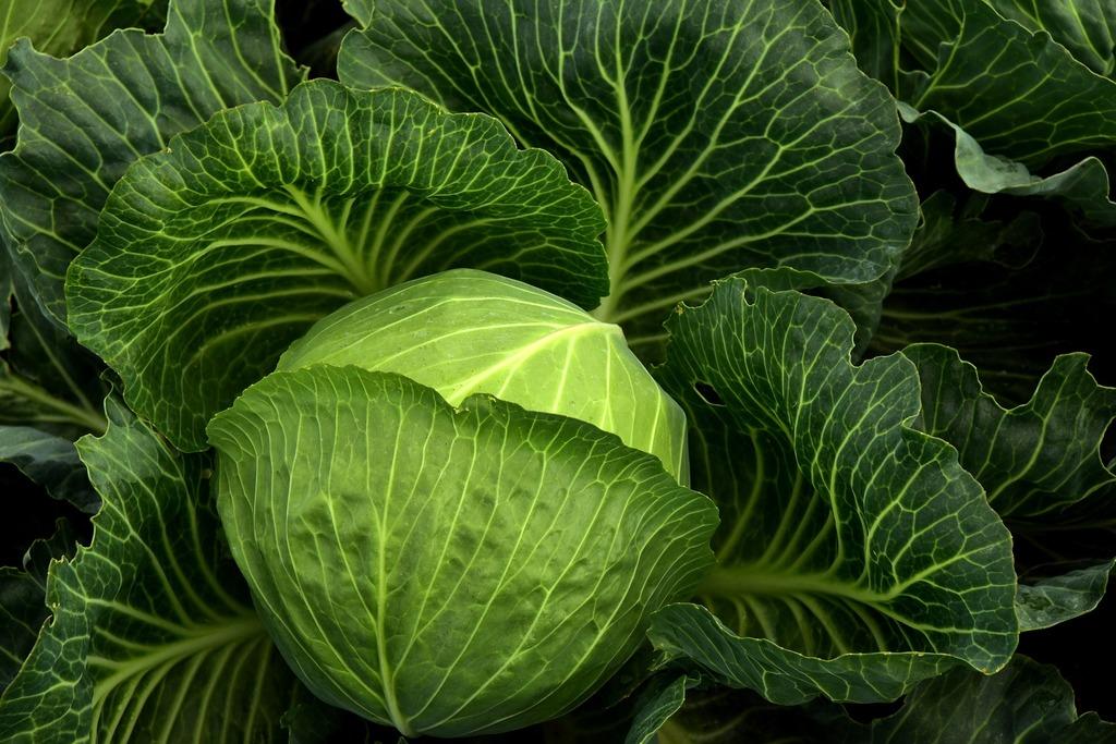 Врачи рассказали, почему критически важно есть зеленые листовые овощи