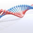 Генетики подсказали способ быстро сбросить лишний вес