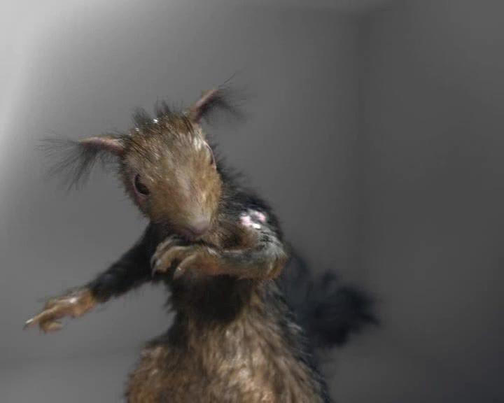 Creepy squirrel
