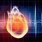 Сердце умеет регенерировать
