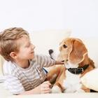 Домашние животные делают детей здоровее
