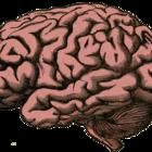 Диета и тренировки могут спасти мозг от старения, говорят неврологи
