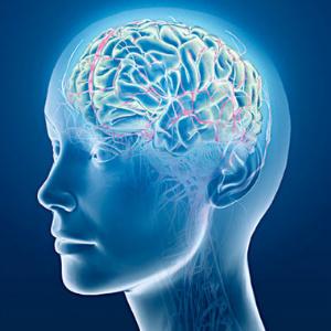 Как работает мозг человека: часть вторая
