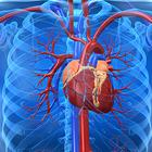 Ученые нашли биомаркер риска заболеваний сердца