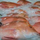 Как правильно выбрать свежую рыбу