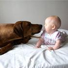 Риск аллергии в младенчестве.