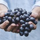 Ученые обнаружили неожиданную пользу винограда