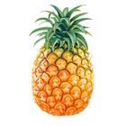 Ананас признали самым полезным фруктом