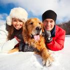 Прогулки с собаками позволяют сохранить здоровье