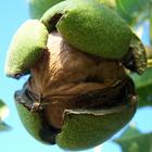 Орехи берегут здоровье и фигуру